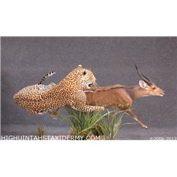 Taxidermy Work for a Life-Sized Leopard or Mountain Lion