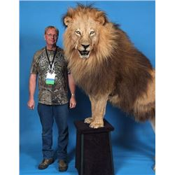 $6,000.00 Custom Taxidermy Work