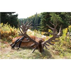 4-day Quebec Red Stag Hunt up to 350 for One Hunter