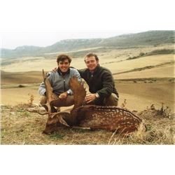 5-day Spain Choice of Fallow Deer or Roe Deer for Two Hunter and Two Observers