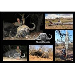 10-day Mozambique Cape Buffalo and Crocodile Hunt for Two Hunters