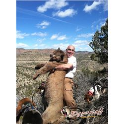 5-day Colorado Mountain Lion Hunt One Hunter