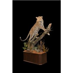 Custom Lifesize Leopard Mount