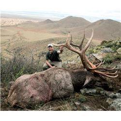 7-day Mongolian Altai Wapiti Hunt for One Hunter