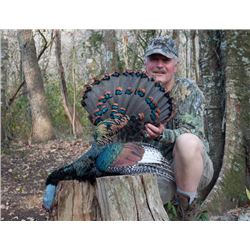 9-Day Ocellated and Gould's Turkey Hunt for Two Hunters