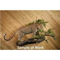 Custom Life-size Leopard Mount
