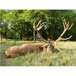 8-day Hungary Royal Big Game Hunt for One Hunter and One Observer