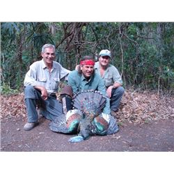 7-day Campeche Jungle Hunt for Three Species for Two Hunters