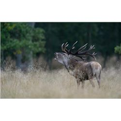 5-day France Gold Medal Red Deer and Roe Deer Hunt for Two Hunters and Two Observers