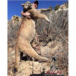 7 Day Utah Mountain Lion Hunt for One Hunter