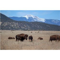 3 Day New Mexico Bison Hunt for One Hunter and One Observer