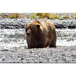 12 day Alaska Kodiak Brown Bear Hunt for One Hunter