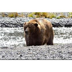 12 day Alaska Kodiak Brown Bear Hunt for One Hunter