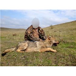 SAFARI ART Wolf Hunt in Macedonia for 2 Hunters