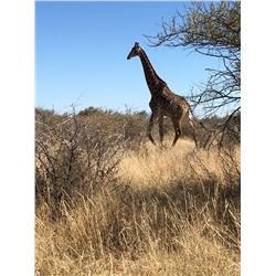 KOCH SAFARIS 5-Day, 1:1 Hunt for a Giraffe Bull in Botswana for 1 Hunter and 1 Observer