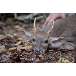 BALAM MEXICO 7- Day Mexican Campeche Jungle Hunt for 2 Hunters