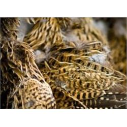 SAFARI ART 5 Day Trip with 3 Day Red Fox and other Small Predator Hunt in Serbia with 2 Days of Tour