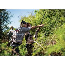 POINTER WINGSHOOTING ARGETNIA Bucket List! 4 Day Dove Hunt for 4 Hunters