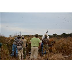 MILES AND MILES OUTFITERS 4 Day High Volume Dove Hunt in Argentina for 10 Hunters