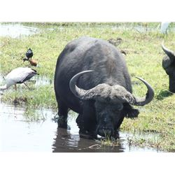 IC AFRICA 10 Days Exclusive Sightseeing Safari & Tour in South Africa