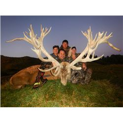 WANGANUI SAFARIS 2 Hunters Pursue 1 Red Stag Each Up To 320 SCI with 2 Observers in New Zealand