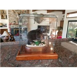 GEORGE SCHAMN BLACK BEAR SCULPTURE 9 1/2 X 13 1/2 X 14 1/2