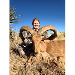 5 - DAY AOUDAD SHEEP HUNT ON THE WILLIAMS RANCH IN TEXAS FOR 1 HUNTER