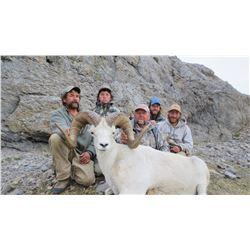 KLUANE FIRST NATION DALL'S SHEEP PERMIT