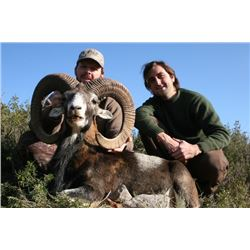 4 - DAY FREE RANGE TROPHY IBERIAN MOUFLON SHEEP HUNT FOR 1 HUNTER AND 1 NON-HUNTER (Trophy Fees & Da