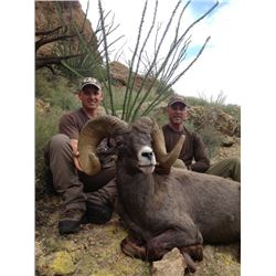 NEW MEXICO DESERT BIGHORN SHEEP PERMIT