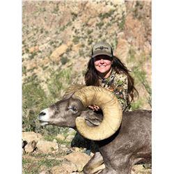 ARIZONA DESERT BIGHORN SHEEP PERMIT