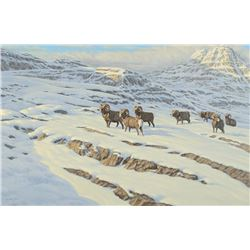 "29 X 43 ""BIGHORN SHEEP IN THE SNOW"" BY: HARRY ANTIS"