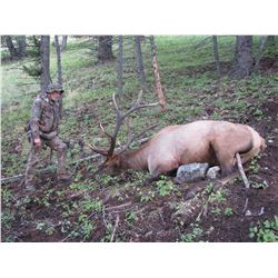 6 - DAY RIFLE ONLY HUNT FOR ELK IN MONTANA
