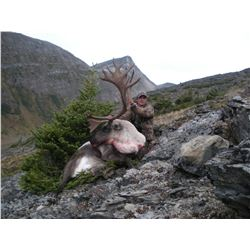 14 - DAY 1X1 MOOSE WITH MTN GOAT OR CARIBOU HUNT IN BRITISH COLUMBIA FOR 1 HUNTER