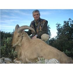3 - DAY FREE RANGE BARBARY SHEEP HUNT IN SPAIN (Trophy Fee up to 24 inch 3-Daily Rates Included)