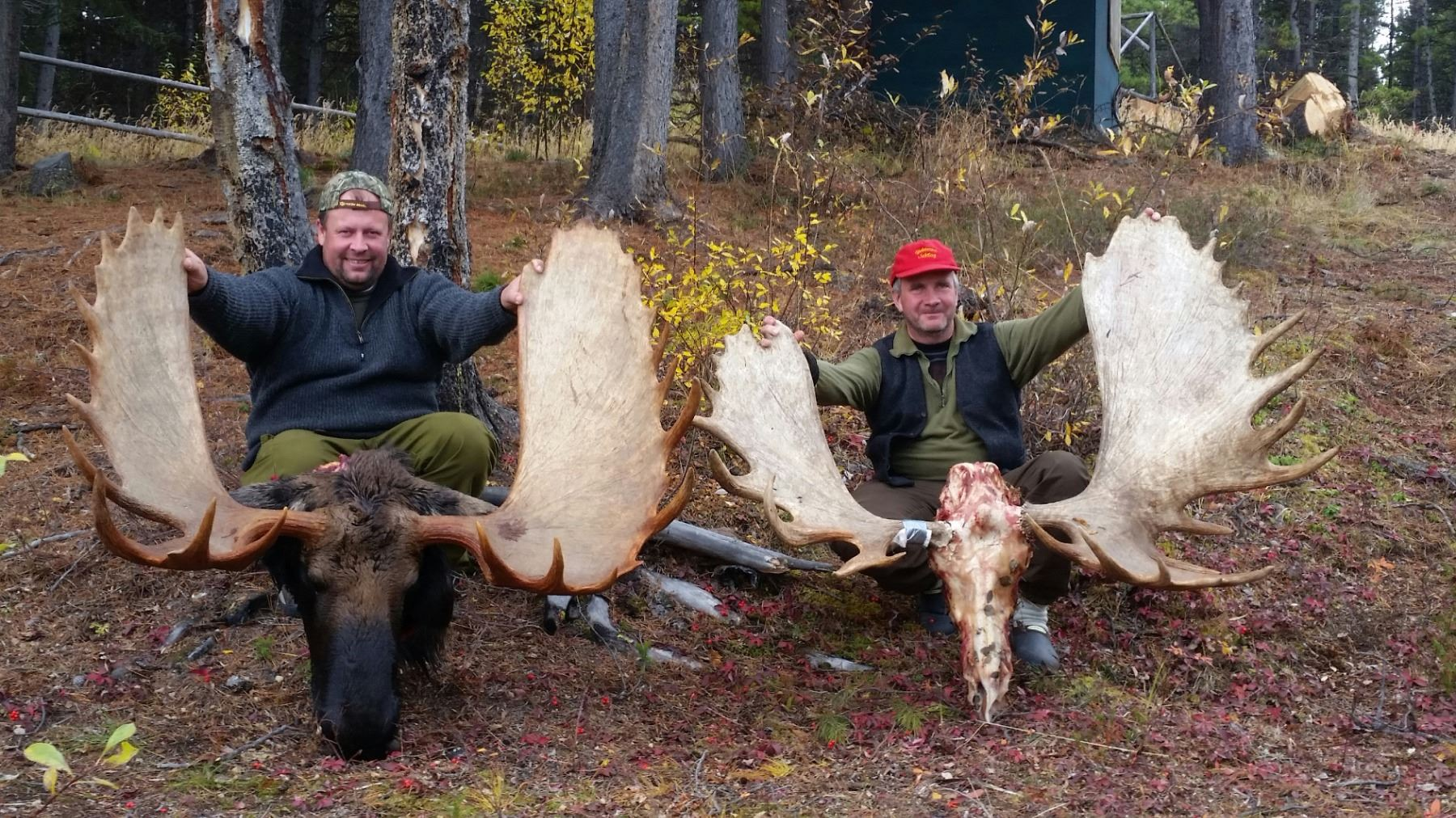 Hunter Day Yukon >> 12 Day Yukon Moose Hunt For 1 Hunter
