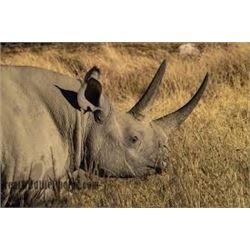 Black Rhino Portrait on Aluminum by Lynn Starnes