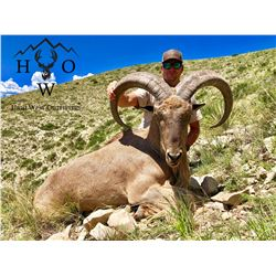 3-Day West Texas Aoudad Hunt for One (1) Hunter