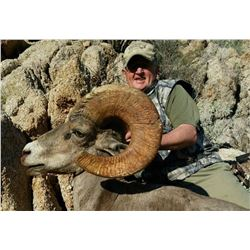 10-day Hunt For Wild Free Ranging Desert Bighorn Sheep for One (1) Hunter