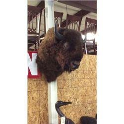 Large Trophy Buffalo Mount