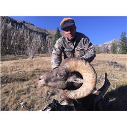 WYO Governor's 2018 Wild Sheep License