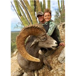 Mexico Desert Sheep and Trophy  Kansas Whitetail Deer