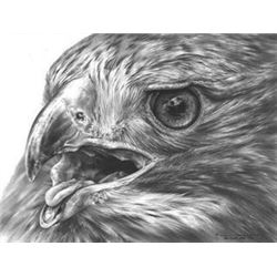 Red-Tailed Hawk Original Drawing by Dennis Mayer Jr. Valued at $750