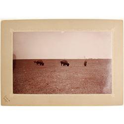 Photo of 3 Bison on the Range