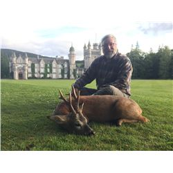 Scotland Spring Roe Deer Hunt