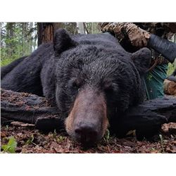 Laforce Outdoors Alberta Black Bear Hunt