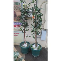 Qty 2 Tall Faux Ficus Trees in Green Planters