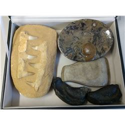 Fossil & Artifact Collection