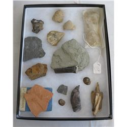 Authentic Fossil Collection