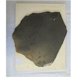 Large Slate Trilobite Fossil